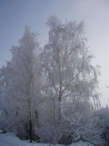 Зимняя сказка_2